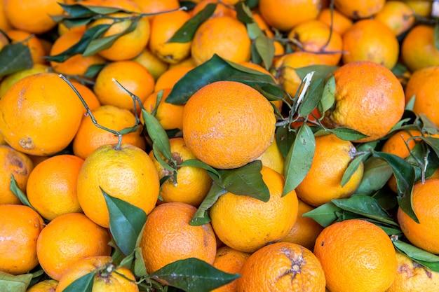 Wiele świeżych owoców pomarańczy oskubanych z gałęzi drzewa pomarańczowego.