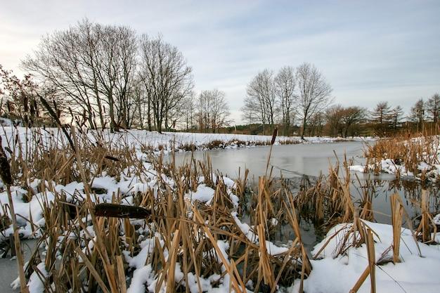 Wiele trzcin na pierwszym planie pokrytych śniegiem wystaje z lodu w małym jeziorze. za jeziorem rośnie wiele drzew. niebo jest szare z chmurami. pogoda jest spokojna.