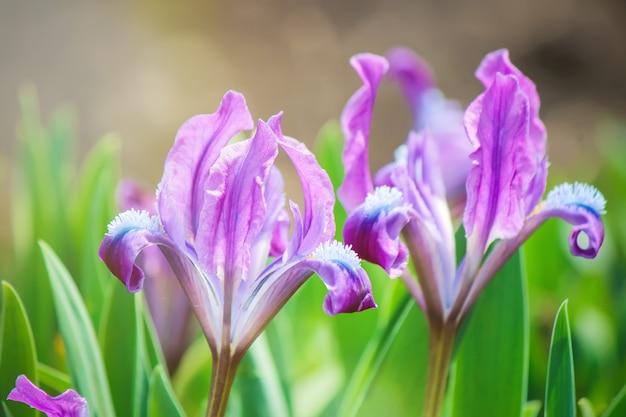 Wiele zdjęć kwiatów. kolaż. selektywna ostrość