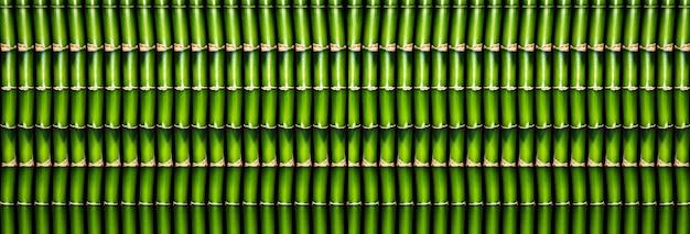 Wiele zielonych bambusowych patyków uformowanych w jeden