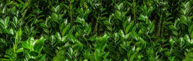 Wiele zielonych roślin. rośliny zielone tło. ogrodnictwo w szklarni. ogród botaniczny, hodowla kwiatów, koncepcja przemysłu ogrodniczego