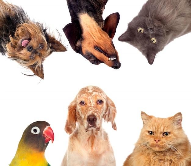 Wiele zwierząt domowych izolowane