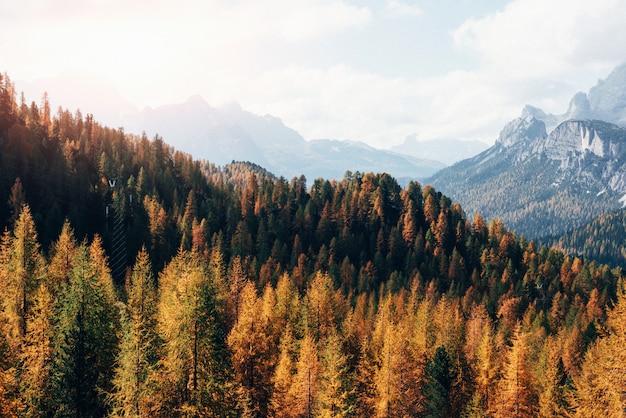 Wielka odległość. majestatyczne góry z pięknymi lasami jesienią w słoneczny dzień. piękny krajobraz