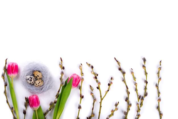Wielkanoc na białym tle z przepiórczymi jajami w gnieździe i tulipany z gałęzi wierzby i wielkanocne messages.free miejsca na tekst.