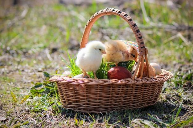 Wielkanoc. wielkanocne dekoracje w koszu. wiosna. selektywna ostrość.