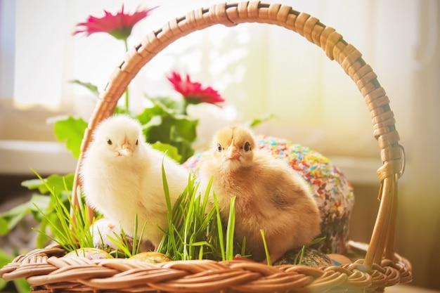 Wielkanoc. wielkanocne dekoracje w koszu