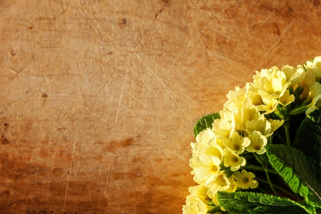 Wielkanocna koncepcja. pierwiosnek primula z żółtymi kwiatami na porysowanym drewnianym stole z porannymi cieniami. inspirujące naturalne kwiatowy wiosną lub latem kwitnące tło. widok z góry płasko leżał kopia miejsce.