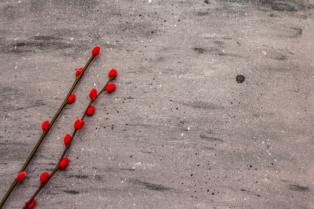 Wielkanocna koncepcja zero marnotrawstwa. pieczęcie wierzby czerwonej. brak plastikowego, ekologicznego trendu. szary tło betonu
