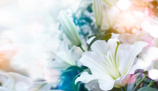 Wielkanocna lilia lilium longiflorum.