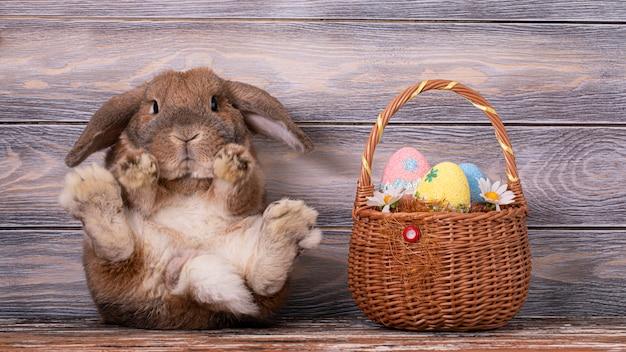 Wielkanocna owca rasy karzeł królika siedzi na parkiecie. potężne tylne nogi królika. imbirowy królik patrzy w kamerę. kosz z jajkami.