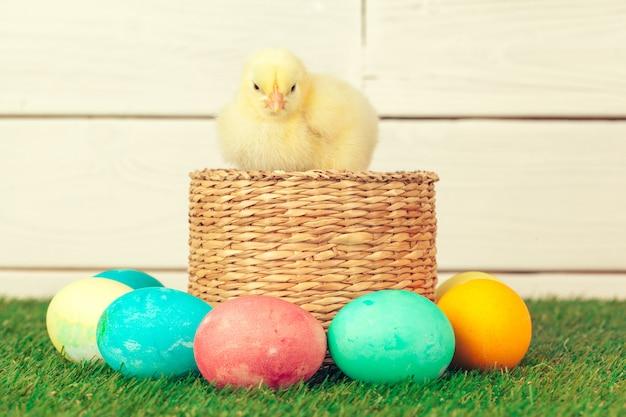 Wielkanocni jajka i kurczaki na zielonej trawie
