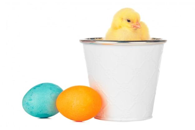 Wielkanocni kolorowi jajka i śliczny mały kurczak odizolowywający na bielu