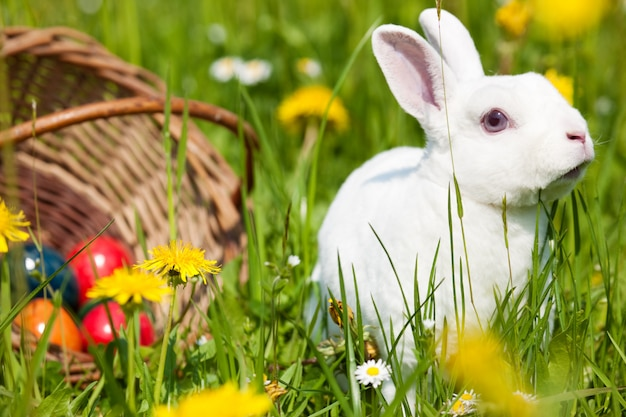 Wielkanocny królik na łące z koszem i jajkami
