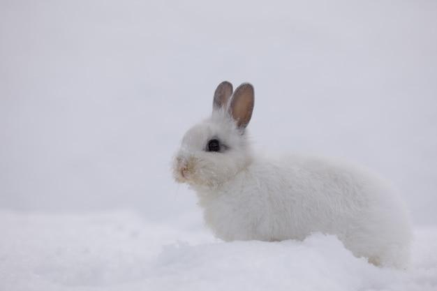 Wielkanocny królik na śnieżnym tle zając w śniegu