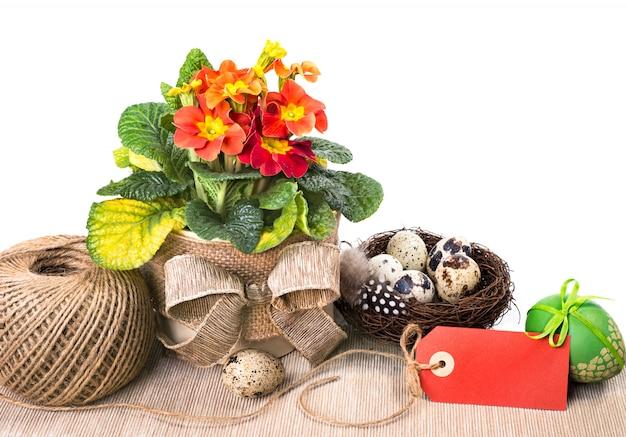 Wielkanocny Układ Z Pomarańczowym Pierwiosnkiem Na Whte, Tekst Przestrzeń Premium Zdjęcia
