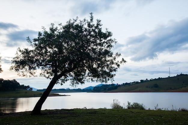 Wielki drzewo w wsi polu z wodą przy wieczór