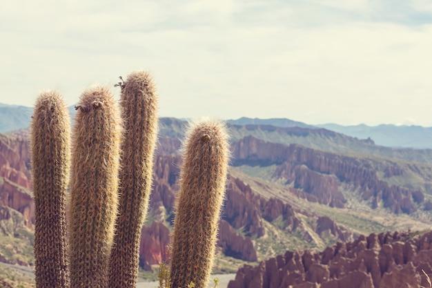 Wielki kaktus na wyspie incahuasi, solnisko salar de uyuni, altiplano, boliwia. niezwykłe naturalne krajobrazy opuszczone słoneczne podróże ameryka południowa