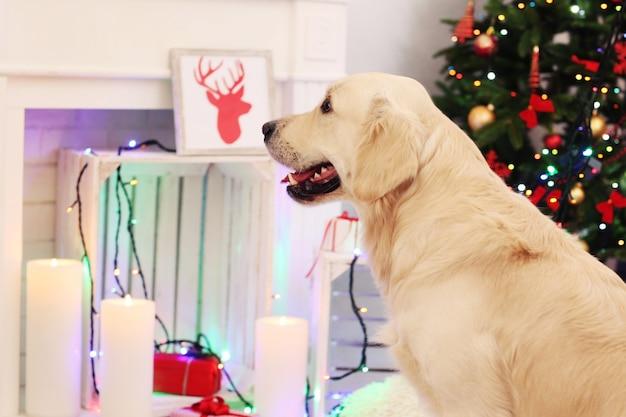 Wielki labrador na świątecznej dekoracji