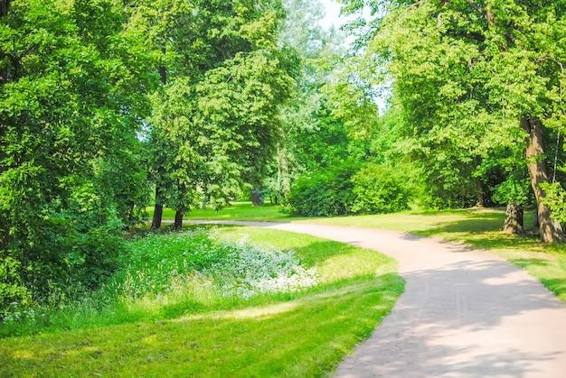 Wielki zielony park w oranienbaum lomonosov