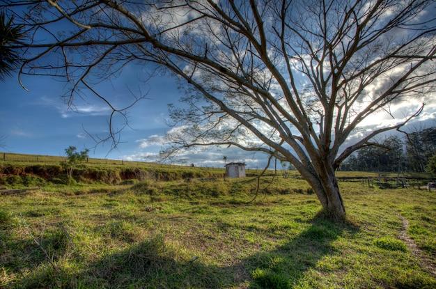 Wielkie drzewo na wsi - szerokie światło tylne
