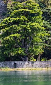 Wielkie drzewo na wybrzeżu jeziora