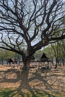 Wielkie drzewo w historycznym parku sukhothai w tajlandii