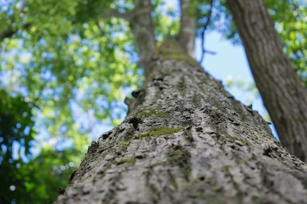 Wielkie drzewo w lesie