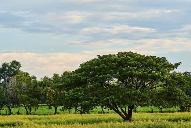 Wielkie drzewo w polu kwiatów