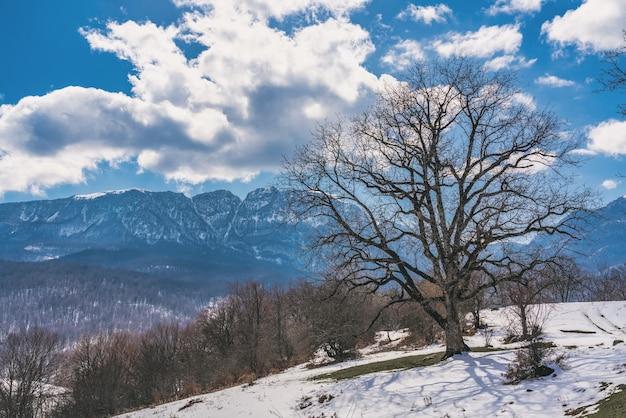 Wielkie nagie drzewo, topniejący śnieg, wiosna