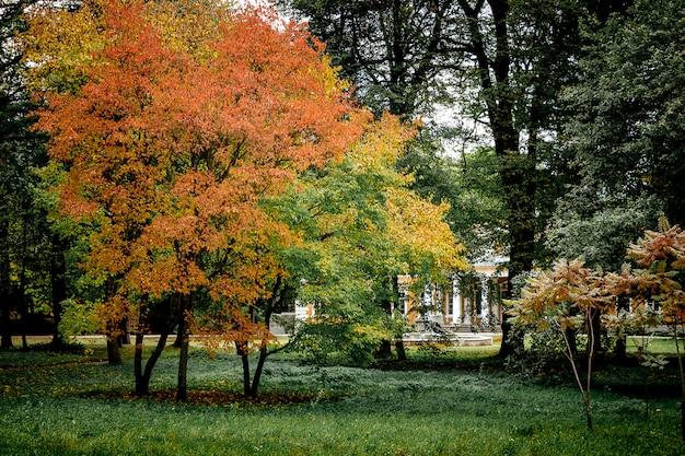 Wielobarwne drzewa w jesiennym parku na starym dworku
