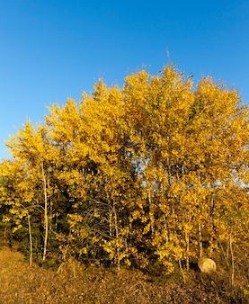 Wielobarwne jesienne drzewa w słońcu w słoneczne dni jeszcze ciepłej jesieni
