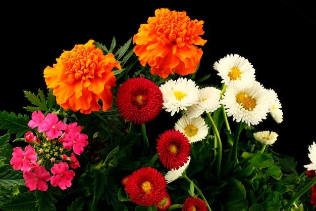 Wielobarwne kwiaty są zbliżone