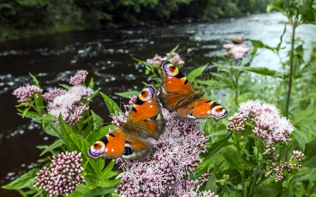 Wielobarwne motyle z bliska