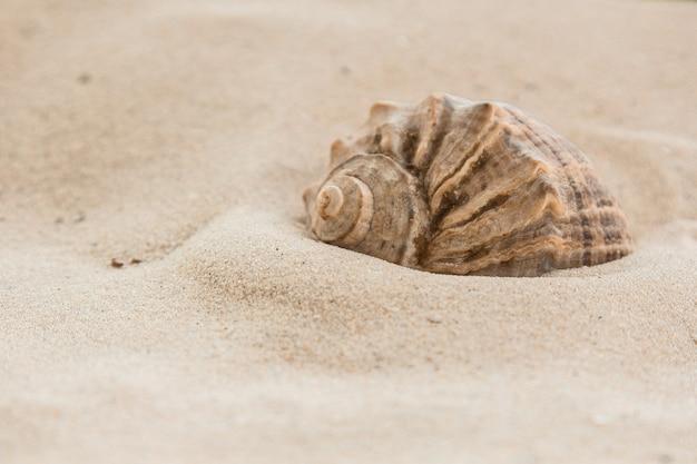 Wielobarwne muszle rzeczne leżą chaotycznie na piasku obok morza