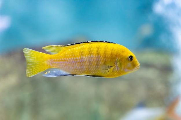Wielobarwne ryby w akwarium w akwarium kazańskim. miejsca turystyczne kazania. zbliżenie.
