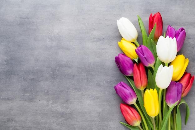 Wielobarwne wiosenne kwiaty, tulipan na szarym tle.