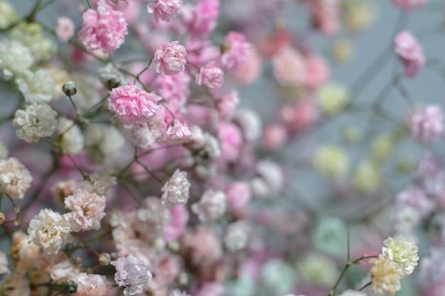 Wielobarwny bukiet kwiatów łyszczec. minimalna kompozycja kwiatów łyszczec na jasnym pastelowym tle.