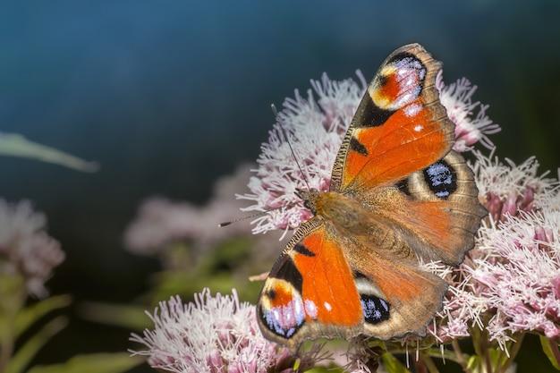 Wielobarwny motyl na roślinie
