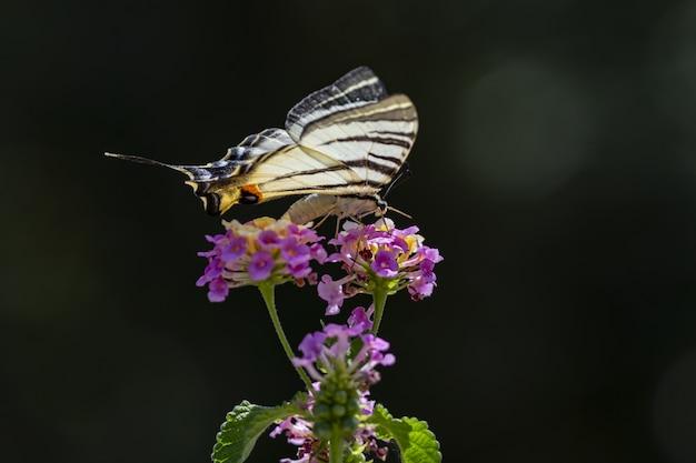 Wielobarwny motyl siedzi na kwiatku
