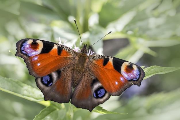 Wielobarwny motyl z bliska