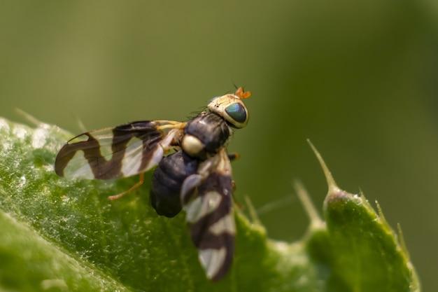 Wielobarwny owad na roślinie z bliska