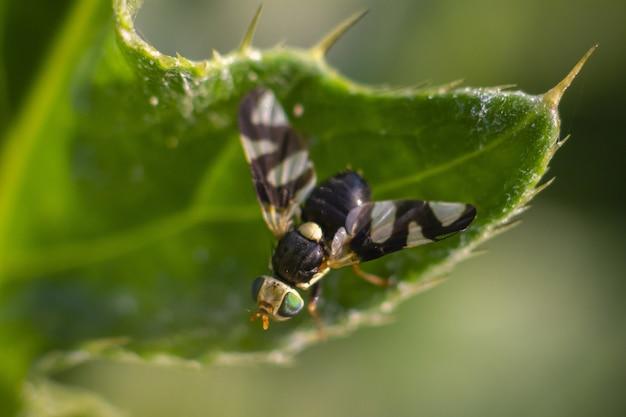 Wielobarwny owad siedzący na roślinie