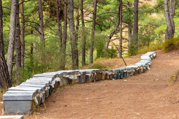 Wielobarwny ule w pasiece w lesie kolorowe ule i latające pszczoły w pasiece w pobliżu sosny