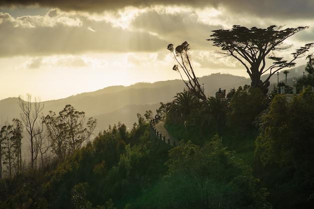 Wielobarwny zachód słońca nad górami. piękny zachód słońca z kolorowym niebem i chmurami w karpatach. wysokie drzewo na poboczu drogi i góry w tle.