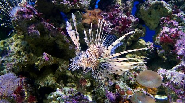 Wielokolorowa ryba pływa pod wodą w akwarium