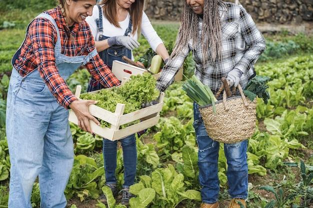 Wielorasowe kobiety trzymające drewniane pudełka ze świeżymi ekologicznymi warzywami - główny nacisk na rękę trzymającą sałatę