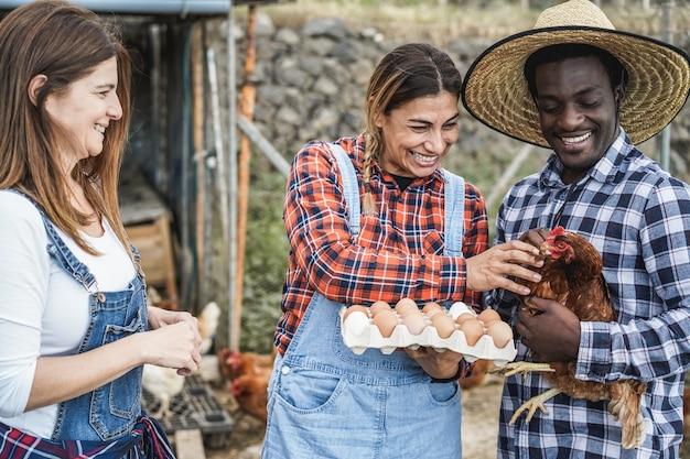 Wielorasowi rolnicy zbierający ekologiczne jaja z kurnika - skup się na rękach trzymających kurczaka