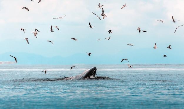 Wieloryb i mewy na morzu