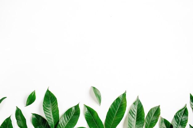 Wieniec ramki z zielonych liści na białej powierzchni