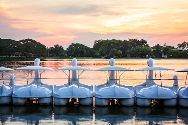 Wiersz biały łabędź spinning rowery wodne na wodzie w jeziorze parku publicznego w okresie światła słońca, zmierzchu